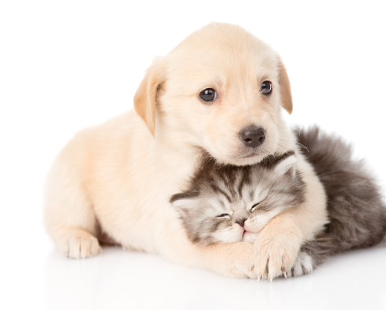 PUPPY/KITTEN PACKAGE: SAVE $60